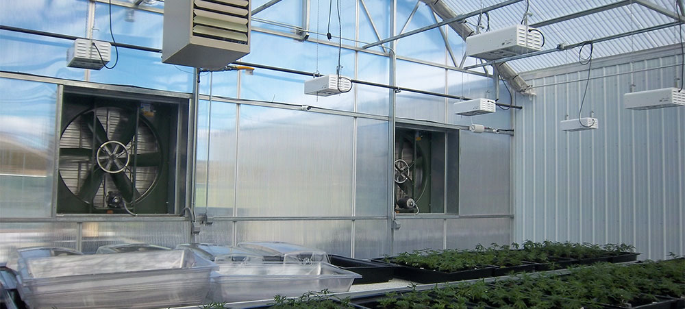Lower cannabis greenhouse lighting costs - use 25% fewer light fixtures