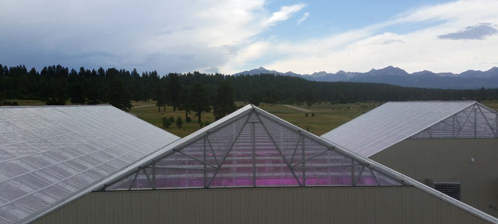 Polycarbonate roof coverings to diffuse light