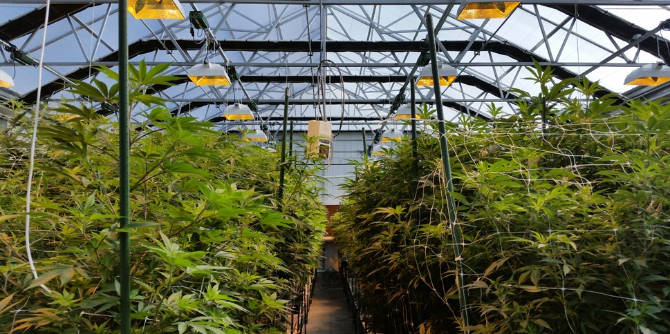 Custom Lighting Configurations for Optimal Growing & Cost Control