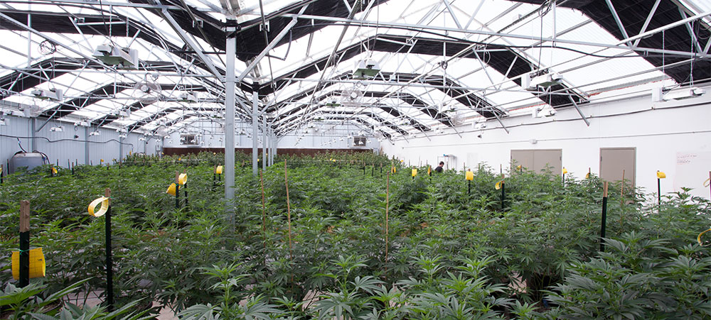 More efficient energy consumption - reduce cannabis greenhouse utility bills by 75%